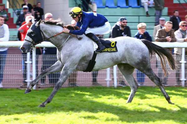 Photo de PINOT GRIGIO cheval de PLAT
