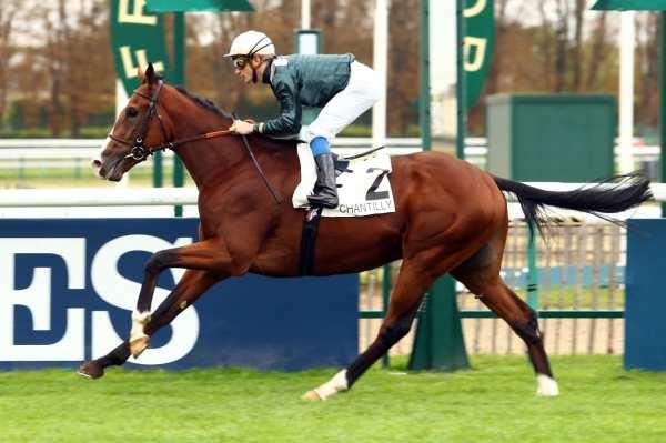 Photo de NEAR GOLD cheval de PLAT