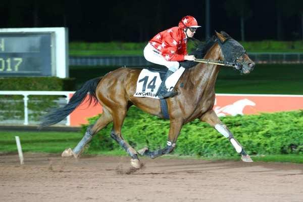 Photo de EUREKA DE TILLARD cheval de TROT MONTE