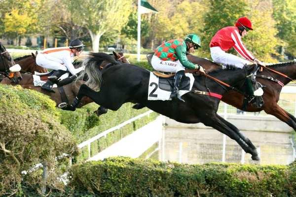 Photo de PICHELOT cheval de HAIES