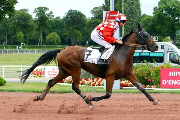Photo de DIKTAT DU START cheval de TROT MONTE