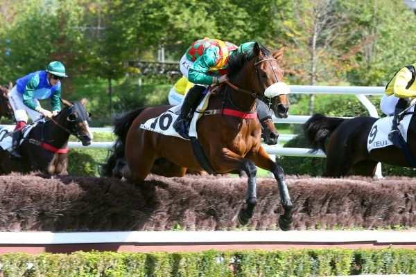 Photo de JANIKA cheval de STEEPLE CHASE