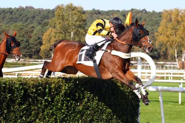 Photo de SOLDIER'S QUEEN cheval de STEEPLE CHASE