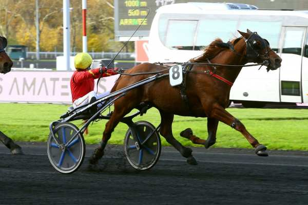 Photo de BOTS DUB'S cheval de TROT ATTELE