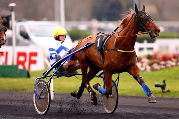 Photo de DORADO BELLO cheval de TROT ATTELE