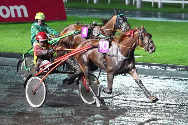 Photo de EL GRECO BELLO cheval de TROT ATTELE