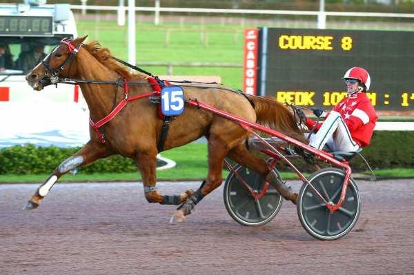Photo de CALINEKA GWEN cheval de TROT ATTELE