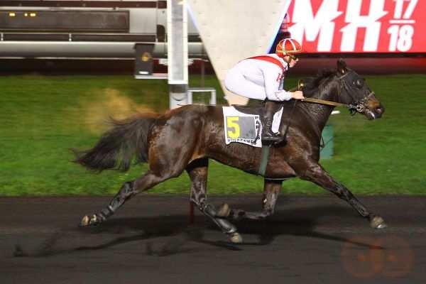 Photo de CESAR DE VRIE cheval de TROT MONTE