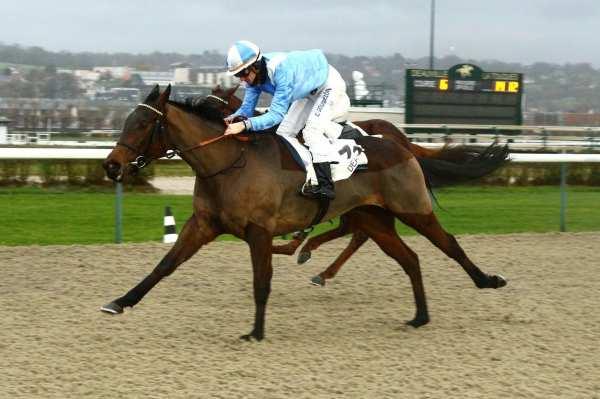 Photo de MADULAIN cheval de PLAT