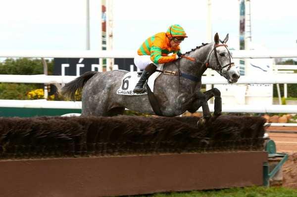 Photo de NORMANDY INVASION  cheval de HAIES