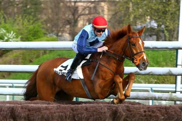 Photo de DALAHAST cheval de STEEPLE CHASE