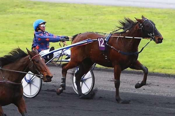Photo de DWELLING HEIGHTS cheval de TROT ATTELE