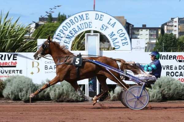 Photo de BOL D'OR OF LOVE cheval de TROT ATTELE