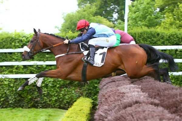 Photo de WHETSTONE cheval de STEEPLE CHASE