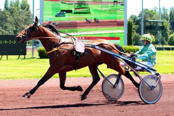 DRUSS DE GUEZ - La fiche CANALTURF du cheval, performances pmu ...
