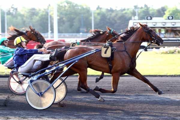 Photo de DARLING LORRAINE cheval de TROT ATTELE