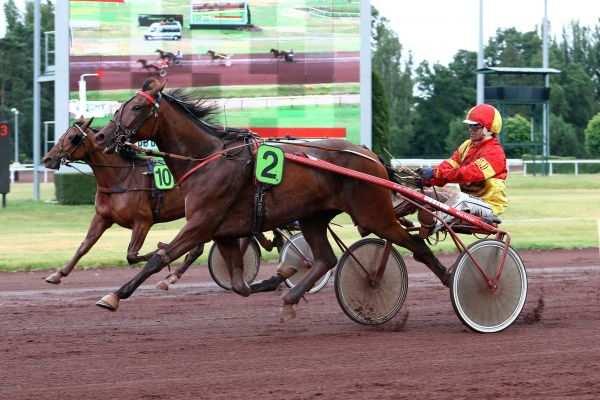 Photo de EPICE LIGERIENNE cheval de TROT ATTELE