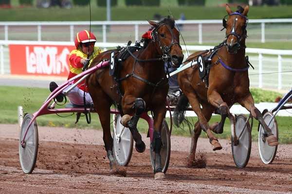 ELECTRA WIND - La fiche CANALTURF du cheval, performances pmu, pédigré,  évolution de la cote en direct, résultats rapports, courses 2021