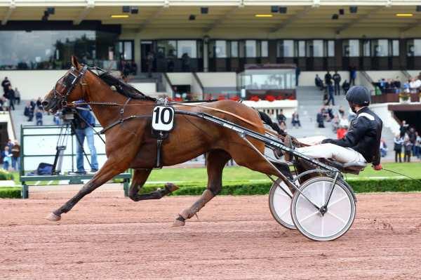 DAYAN WINNER - La fiche CANALTURF du cheval, performances pmu, pédigré,  évolution de la cote en direct, résultats rapports, courses 2021