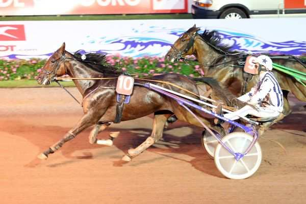 Photo de ECU DU VIVIER cheval de TROT ATTELE