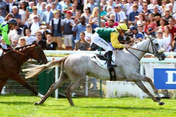 Photo de A QUIET MAN cheval de PLAT