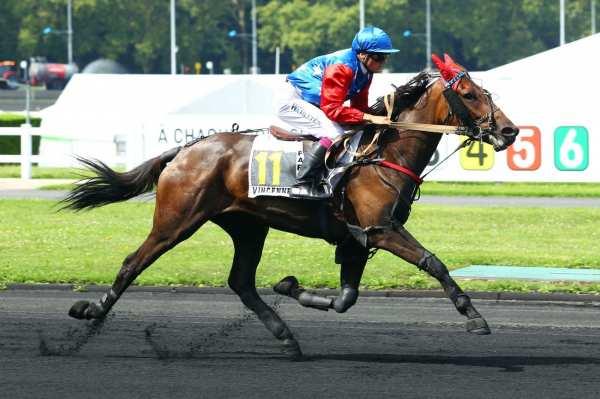 Photo de ESPACE WINNER cheval de TROT MONTE