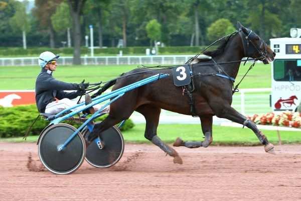 ELECTRA DU VIVIER - La fiche CANALTURF du cheval, performances pmu,  pédigré, évolution de la cote en direct, résultats rapports, courses 2020