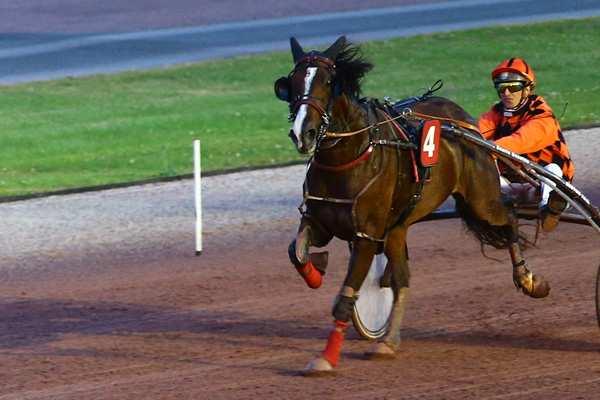 Photo de COMETE DU VAL cheval de TROT ATTELE