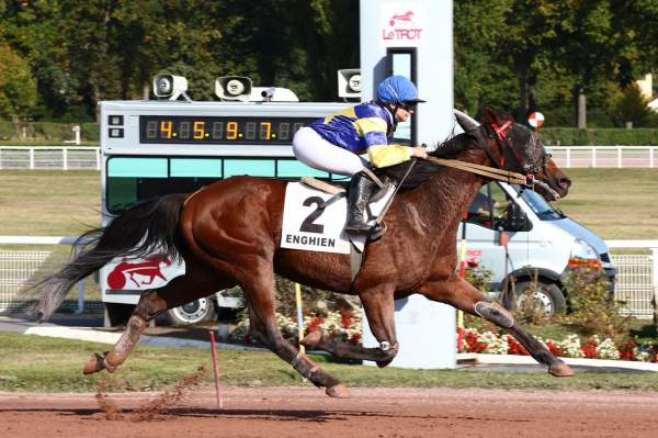 Photo de BEST OF BOURBON cheval de TROT MONTE
