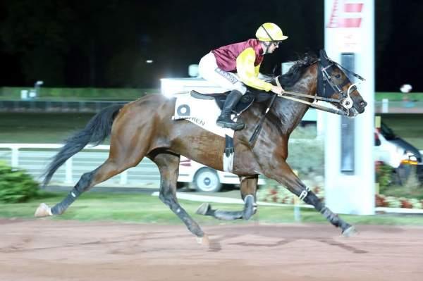 ECOSSAIS DE VIVOIN - La fiche CANALTURF du cheval, performances pmu,  pédigré, évolution de la cote en direct, résultats rapports, courses 2020
