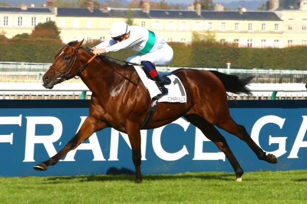Photo de STUNNING SPIRIT cheval de PLAT