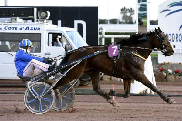 Photo de DIAMANT DU RABUTIN cheval de TROT ATTELE