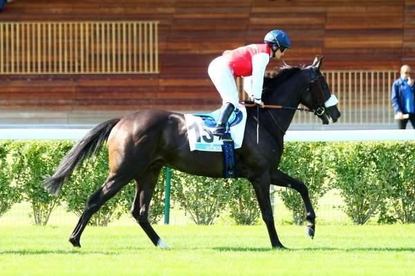 Photo de ALLEZ HENRI cheval de PLAT