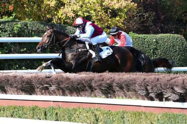 Photo de L'AUTONOMIE cheval de HAIES