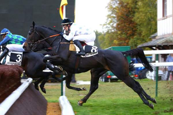 Photo de A MI MANERA cheval de STEEPLE CHASE