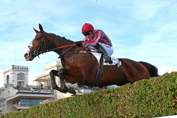 Photo de POLIRICO cheval de STEEPLE CHASE
