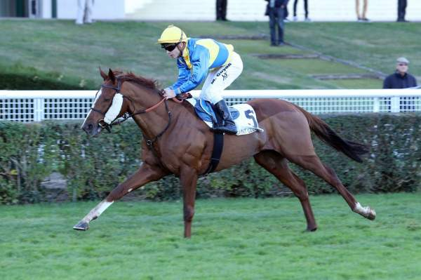 Photo de MOONSHINER cheval de PLAT