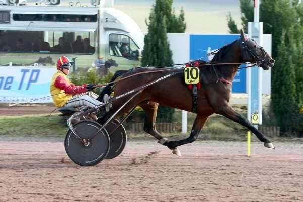 Photo de CEYLAN DAIRPET cheval de TROT MONTE