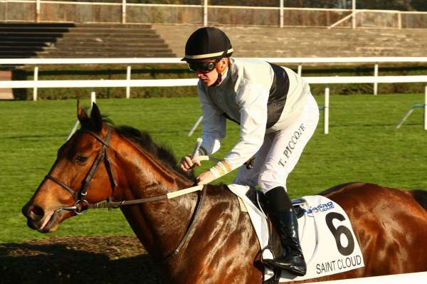 Photo de INCUNABLE cheval de HAIES