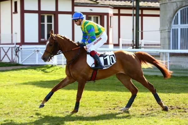 Photo de JENYCHOPE cheval de HAIES