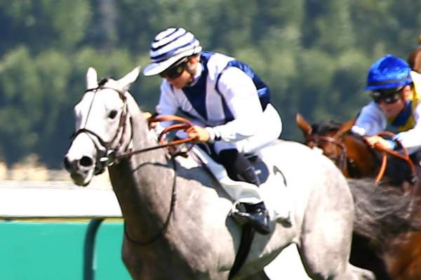 Photo de MAD RIVER cheval de PLAT
