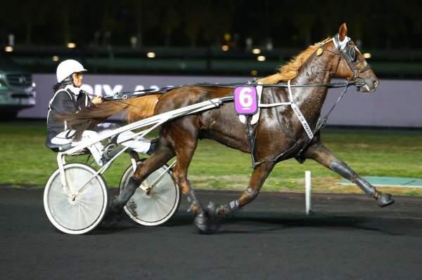 Photo de BEST OF PIERJI  cheval de TROT ATTELE