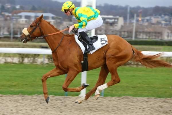 Photo de GIANTISSIME cheval de PLAT
