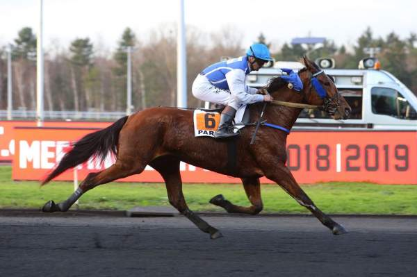 Photo de DEDICACE DE CHENU cheval de TROT MONTE