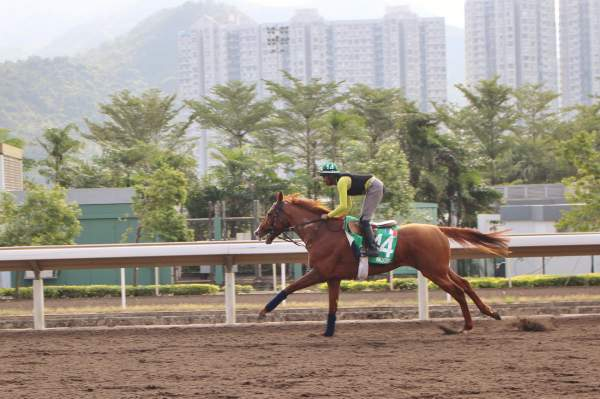 La photo de Waldgeist Hippodrome de Sha Tin