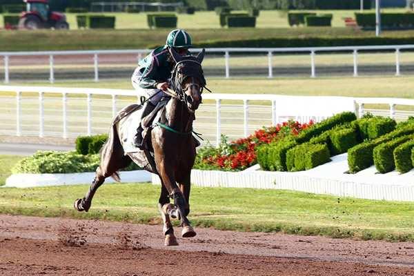 Photo de ESPACE D'ERABLE cheval de TROT MONTE