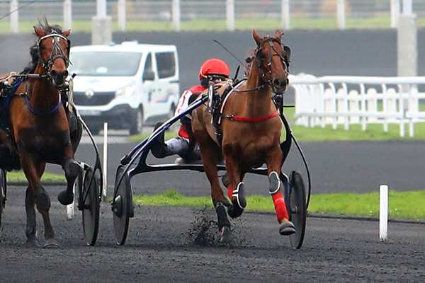 Photo de ELITE SAN LEANDRO cheval de TROT ATTELE