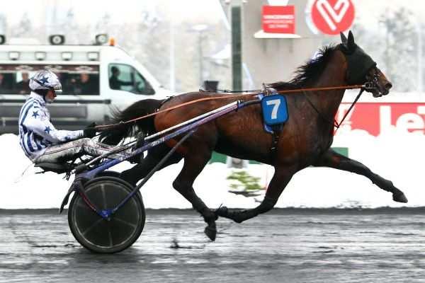 Photo de FALCON DU VIVIER cheval de TROT ATTELE