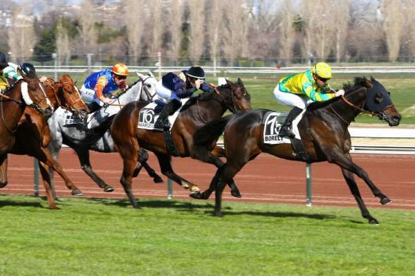 La photo de Just A Formality Quinté+ PMU HANDICAP DE MARSEILLE BORELY