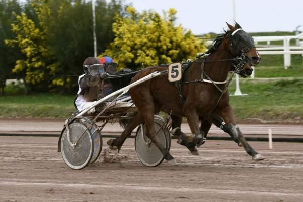 Photo de BAUMONT D'AVIGNERE cheval de TROT ATTELE